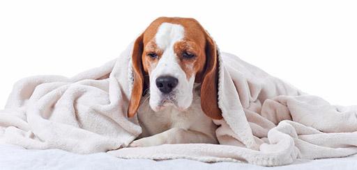 гастроскопия собаке клиника
