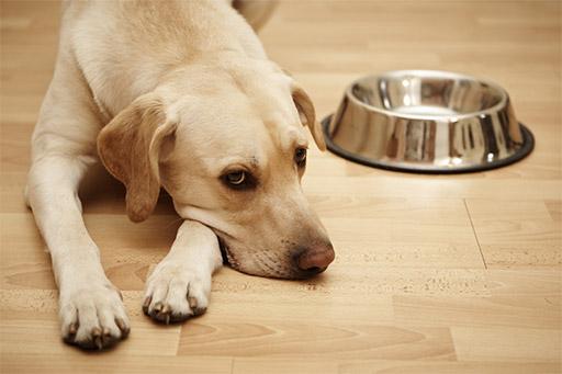 гастроскопия собаке цены