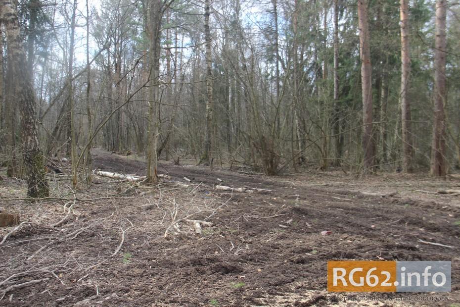Лес после санитарной рубки и вывоза сухостоя